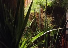 zakładanie ogrodów poznan
